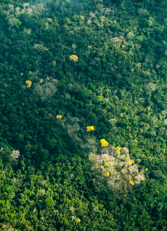 Vamos falar sobre a Amazônia?